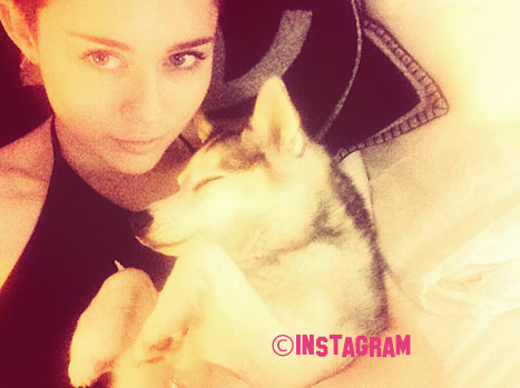 Miley Cyrus' Heart Is Still Broken From When Her Dog Floyd Passed Away