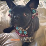Lady Gaga Under Fire From PETA Because She Put Her Jewellery On Her Dog